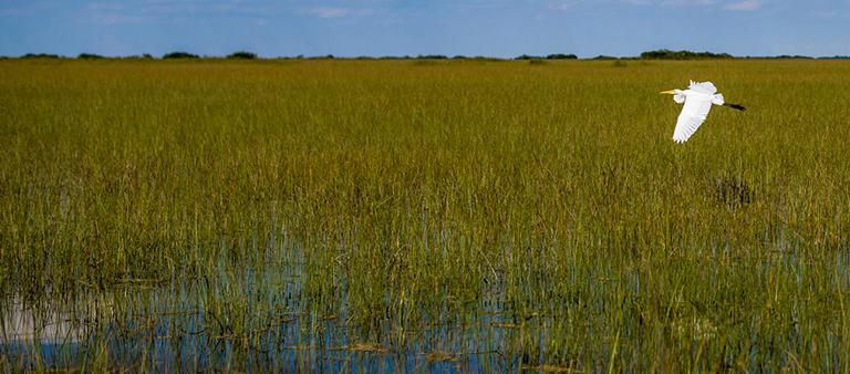 Everglades Mitigation Bank