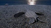 Keep Sea Turtles in the Dark
